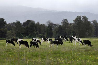 Pasar del corral al pastoreo en la pradera