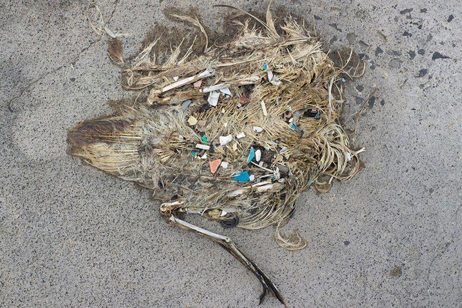 ave plástico