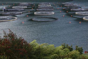 Camanchaca pierde el 4% de su producción anual de salmones por daños en centro de cultivo