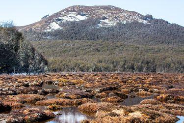 Turberas de la Patagonia: El ecosistema de más de 18 mil años que es clave para alcanzar la carbono neutralidad