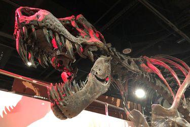 ¿Qué tan rápido caminaba un tiranosaurio Rex?