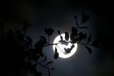 Evento astronomico Luna Roja