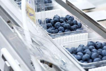 Hortifrut fortalece presencia en Europa tras adquirir a uno de los mayores comercializadores de berries