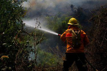 Más de mil hectáreas consumidas: incendios forestales afectan a la V Región y provincias de Marga Marga y Valparaíso mantienen alerta roja