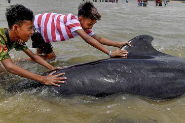 Decenas de ballenas mueren tras varar en una playa de Indonesia