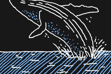 Científicos en alerta por estado de conservación de ballenas a nivel mundial