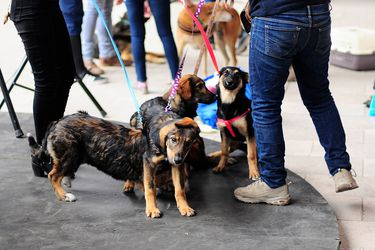 """Coby, mascarilla y Luna: Los nombres tradicionales y """"pandémicos"""" de perros y gatos chilenos inscritos en el Registro Nacional de Macotas"""
