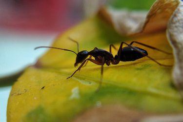 Una visita inoportuna: cómo controlar y evitar a la hormiga argentina