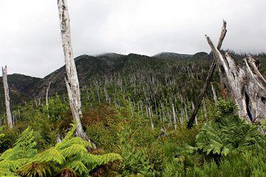 Estudio revela aumento de vegetación tras erupción del Chaitén