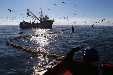 Comisión de Pesca de la Cámara aprueba idea de legislar proyecto que busca eliminar la pesca de arrastre en la merluza común