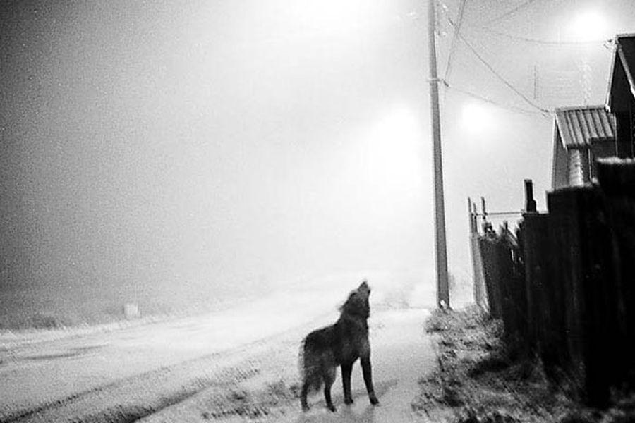 De la serie Vida cotidiana Coyhaique, Aysén (2015), parte del trabajo del fotógrafo Fabián España.