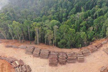 Brazo forestal del grupo Angelini vende el 9% de sus hectáreas productivas en Chile a fondo de BTG