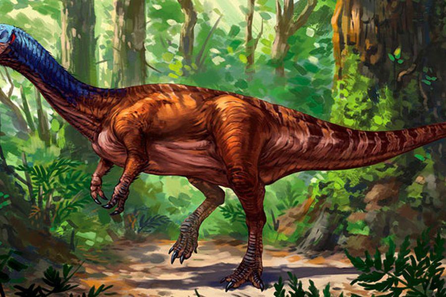 Chilesaurio Seria El Eslabon Perdido De Los Dinosaurios La Tercera Especialistas analizaron el excremento fosilizado de dinosaurios herbívoros ornitópodos. chilesaurio seria el eslabon perdido de