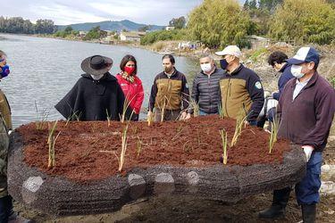 Sistema de islas artificiales flotantes permitirá mitigar la contaminación de la laguna Torca en la Región del Maule