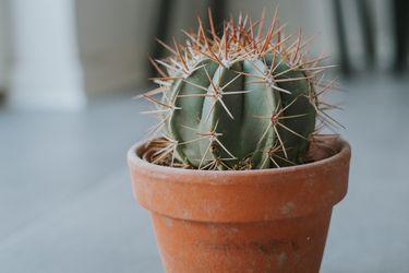 Consejos para cuidar los cactus y suculentas en invierno