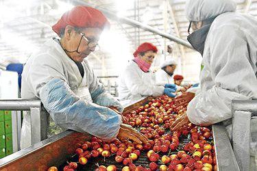 importación fruta Chile