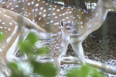 Baby boom animal: nacimientos se triplicaron tras cierre de zoológico palestino al público