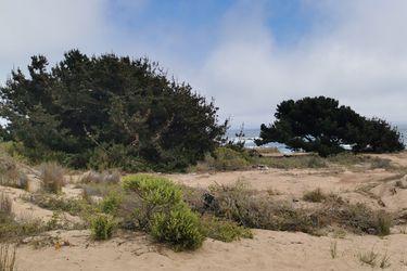 Las dunas de El Tabo, un tesoro natural en peligro