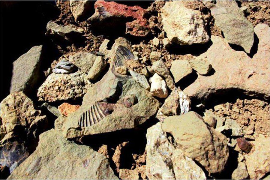 Fósiles-1