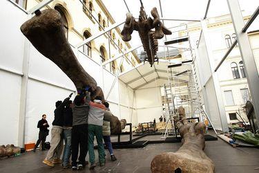 Descubierto en Argentina, este podría ser el dinosaurio más grande del mundo