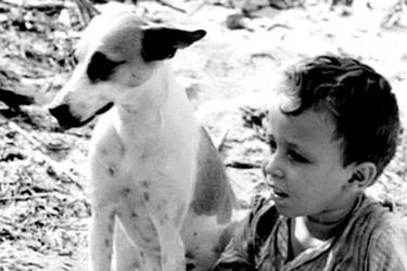Muere Pereira dos Santos, padre del Cinema Novo